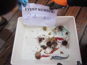 trawl fro web