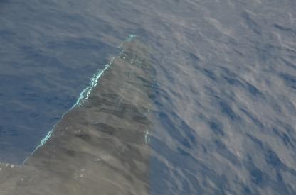 whale Angelika